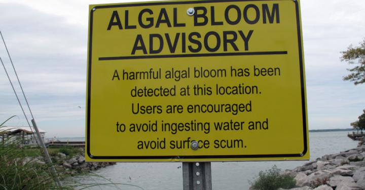 "<a href=""/cost-algal-blooms"">The Cost of Algal Blooms</a>"